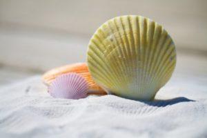 shells-beach